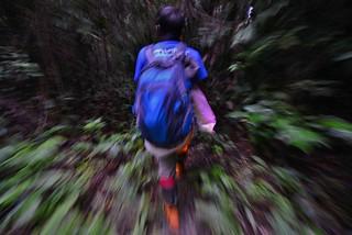 Jungle Trek Borneo Indonesia DSC_4613