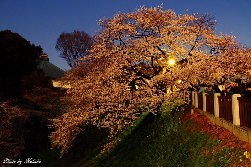 夜桜 -千鳥ヶ淵周辺- by Nakabo