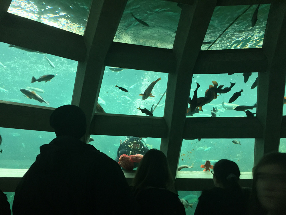 Seattle Aquarium 11