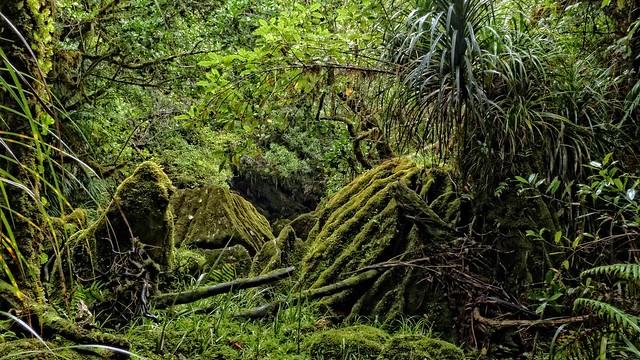 Primeval Wonderland ~ Paparoa National Park
