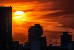 Sol otoñal - Autumn sun
