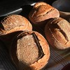 Four sesame wheat loaves, baked this morning. Three available to good homes. Interested? Come and get 'em.