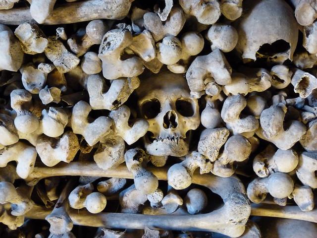 Calavera y huesos del osario de Wamba (Valladolid)