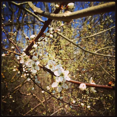 osterspaziergang #esblüht #frühling #spring #sonne #happyday #familytime #rhein