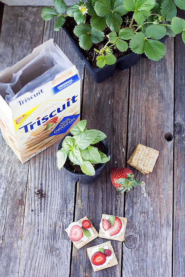 strawberry caprese Triscuit topper