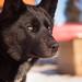 Black Dog by cherynf