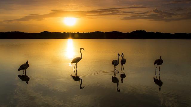 dasanes77 - Flamingo Sunrise.