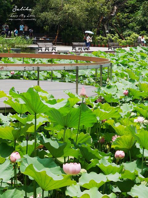 台北一日遊景點推薦植物園荷花蓮花池 (37)