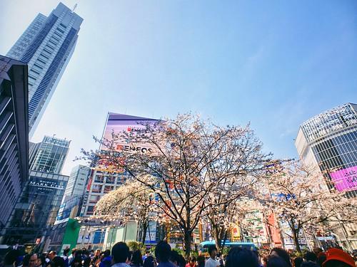 Shibuya x Sakura