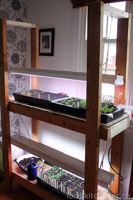 seed starting grow shelves 5
