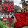 5,000 Poppies - for Anzac Day 2015: Federation Square