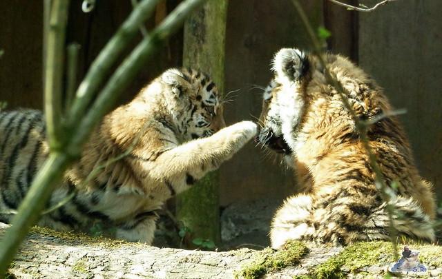 Zoo Eberswalde 22.03.2015   206
