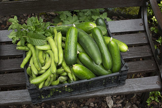 Homegrown and plentiful.