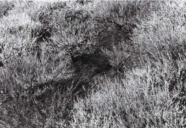 an ume grove,gunma,japan,2015