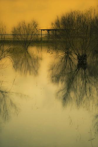 trees lake unitedstates florida sony lakeplacid landscapephotography a7r