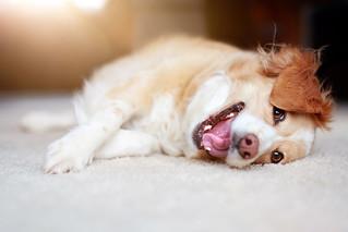 Der Gute-Laune-Hund