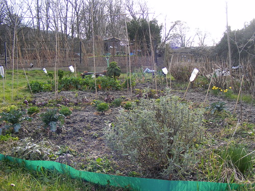 Allotment after winter 1