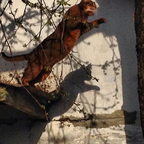 Тень прыгающей Миуччии на стене гостевого домика))) #старыйкрым