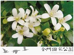 七里香(新聞稿用)