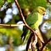Parrot by rajnishjaiswal