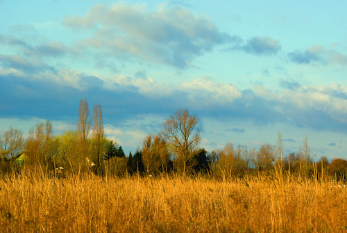 sunset colour cane clouds landscape daylight village sundown poland polska willow tress światło kolor chmury trzcina zachódsłońca drzewa krajobraz wieś zmierzch dobrzykowice wierzba