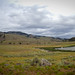Yellowstone National Park landscape, Wyoming (USA)