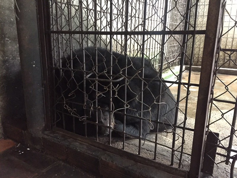 Bao Lam in cage as we found her