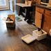 Cat traps in action by Jimmy Legs