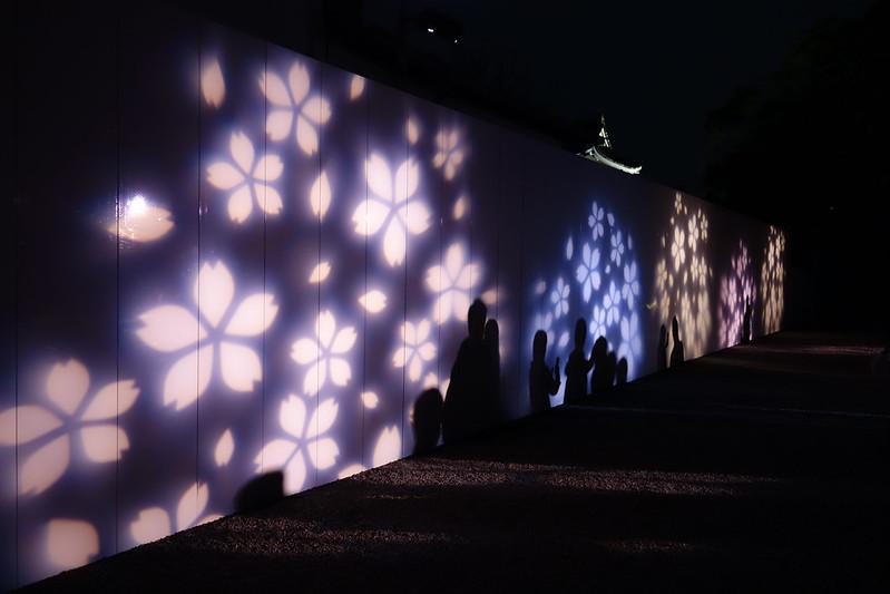 桜の京都 二条城ライトアップ
