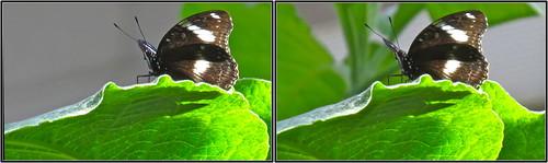 IMG_0396f-Butterfly in 3D