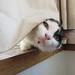 Peek-a-boo by psd