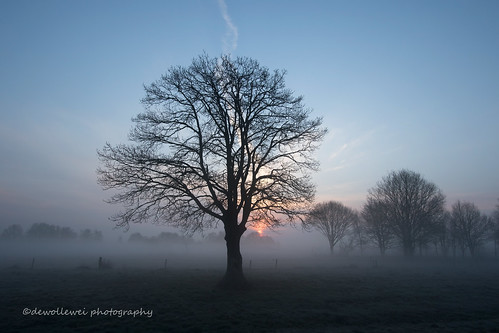 morning tree sunrise vriezenveen