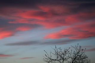 il cielo di sera