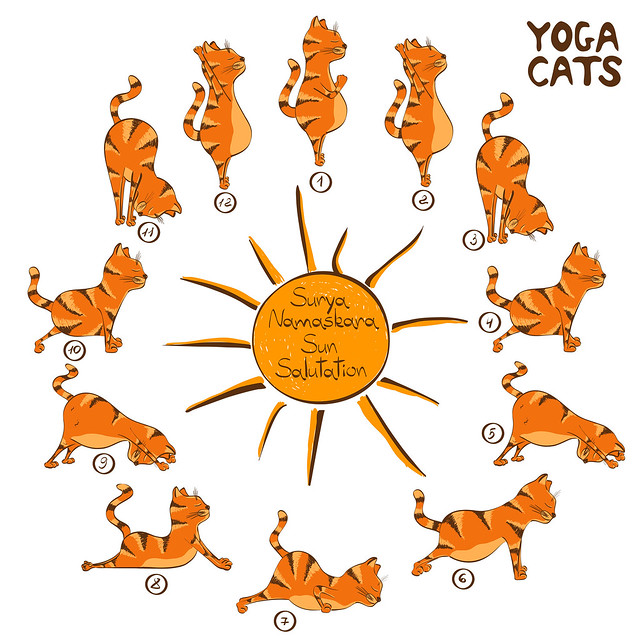 Yoga Cats Sun Salutation