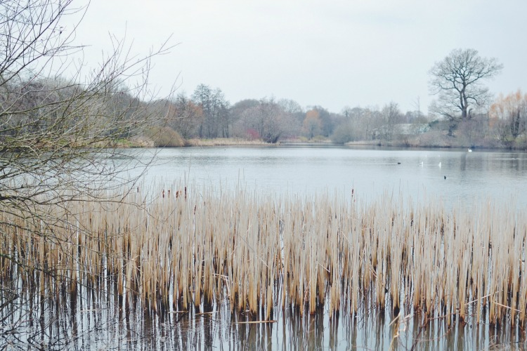 superworm lake