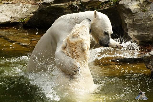 Tierpark Berlin 12.04.2015 195