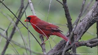Brazos Bend State Park April 2015