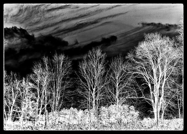 IMG_2441 Trees at Audubon for Cyanotype 5x7 Negative