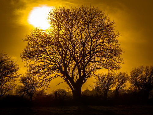 trees ireland sunset canon march spring raw silhouettes 2015 landscapephotography irishlandscape