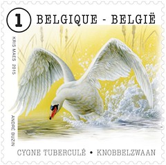 05 ANIMAUX timbre B cygne