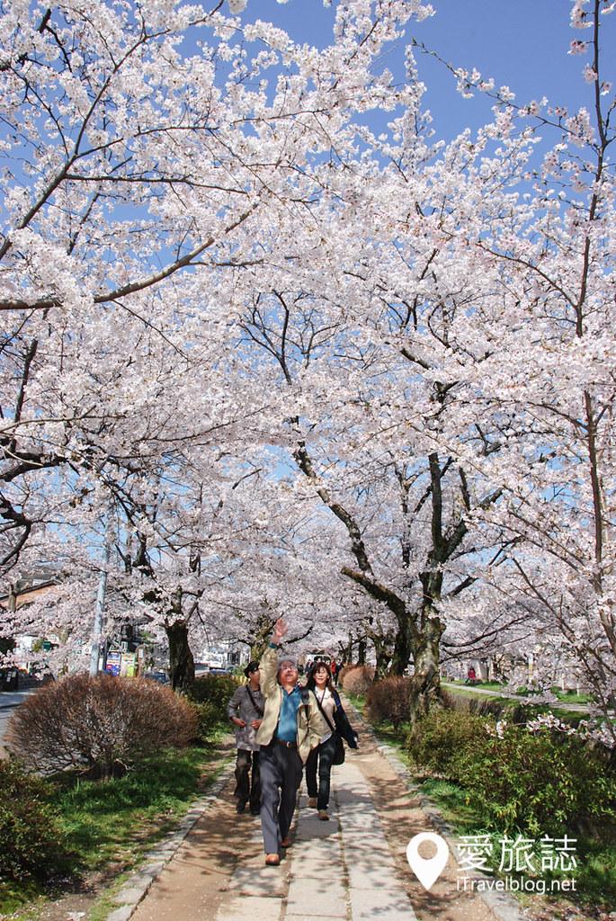 京都赏樱景点 哲学之道 05