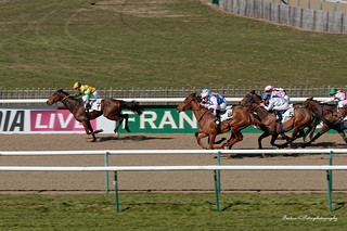 test nikon D750 Horse race in the racecourse of Chantilly in France