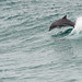 Dolphin! by C McCann