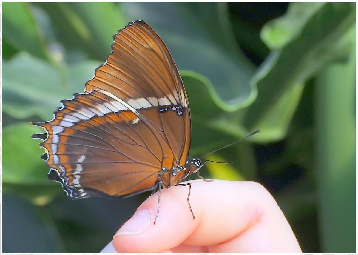 Papillons en Fêtes 2015 17011418935_dea1fbcd25_o