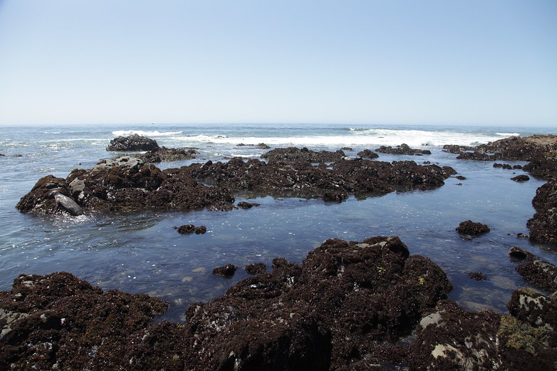 The Tidepools at San Simeon State Beach