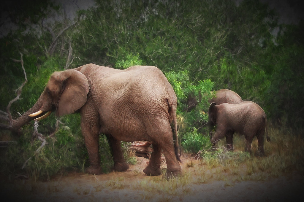 Ellephant family feeding in the bush arty