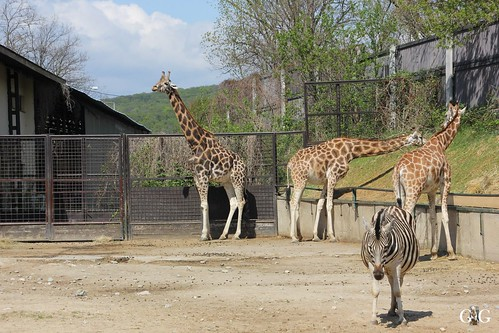 Zoo Bratislava 18.04.201577