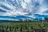 Les Vignes, Molsheim, Alsace