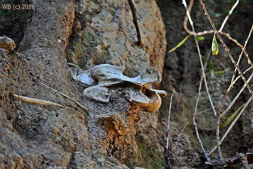 csontosszurdik szekszárd lösz bones bone outdoor horse human antique battle mass grave tömegsír ókor csata