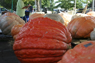 History of the Elk Grove Giant Pumpkin Festival